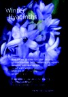 Image: Winter Hyacinths cover